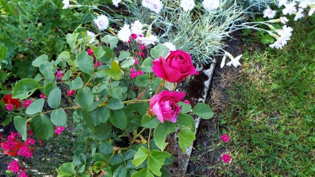 lorraine en fleur 2014 - Page 2 31jj8a