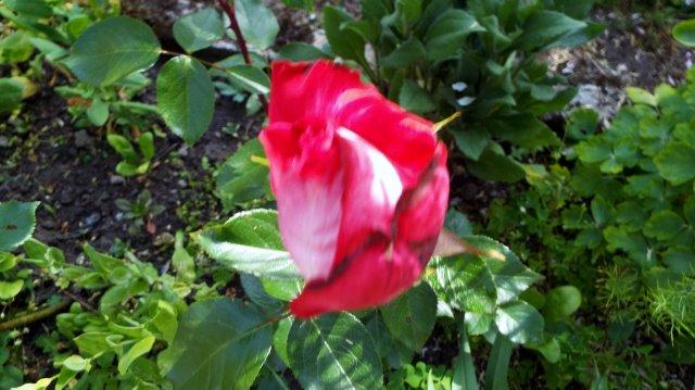 lorraine en fleur 2014 - Page 2 31l3sx