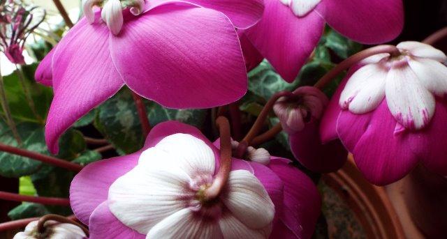orchidées et fleurs d'hiver 188e5b