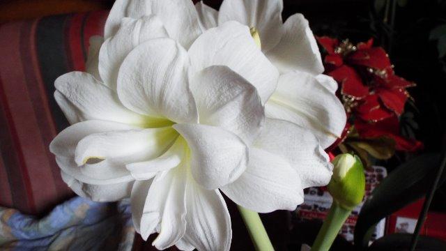orchidées et fleurs d'hiver 18fw5i