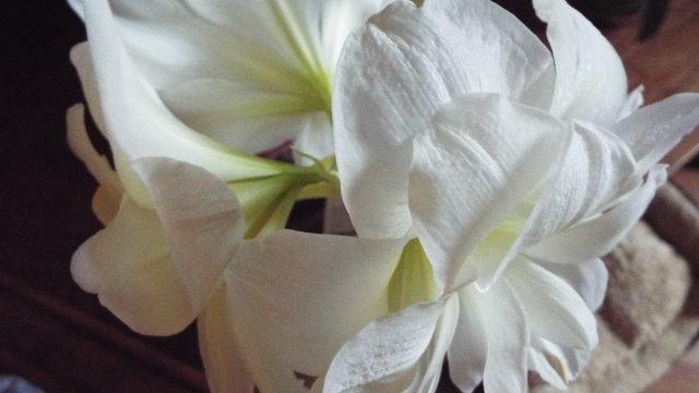 orchidées et fleurs d'hiver 18xrjm