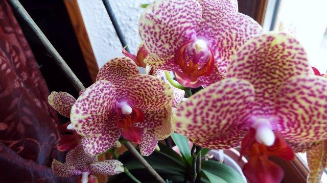 orchidées et fleurs d'hiver 18xvc5
