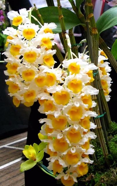 orchidées et fleurs d'hiver 202s6i