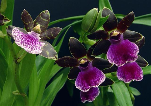 orchidées et fleurs d'hiver 20b8t1