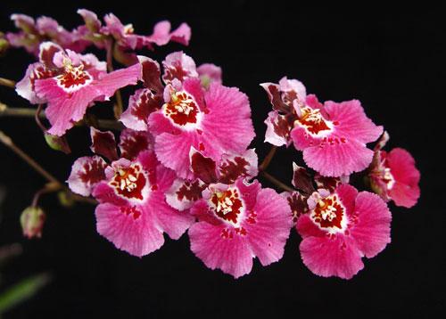 orchidées et fleurs d'hiver 20ipqu