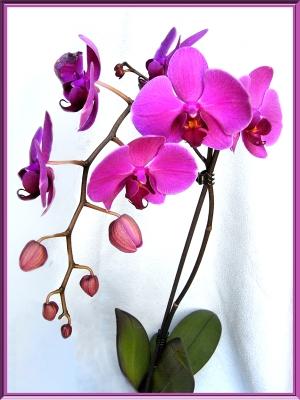 orchidées et fleurs d'hiver 20mg94