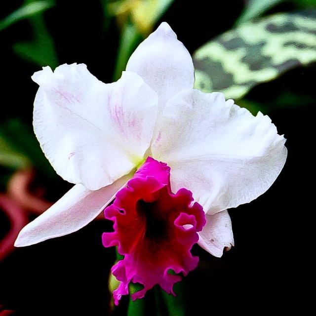orchidées et fleurs d'hiver 20sfzg