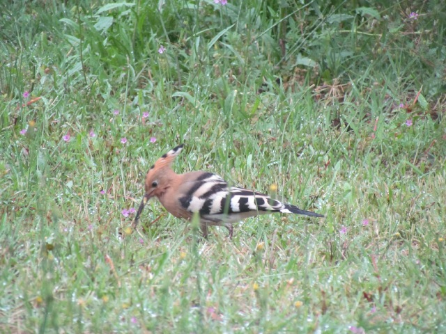 Oiseaux dans mon jardin... 073en1
