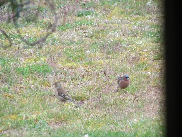 Oiseaux dans mon jardin... 07xbas
