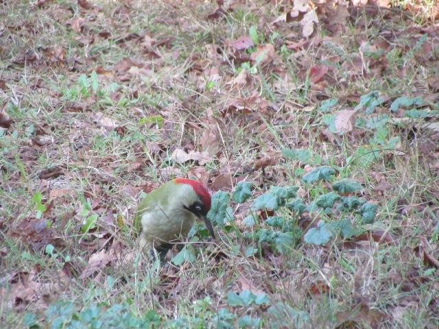 Oiseaux dans mon jardin... 07xlyp