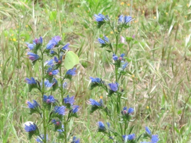 papillons sur nos fleurs  100pjc