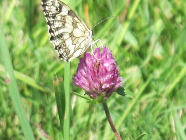 papillons sur nos fleurs  - Page 2 104x1a