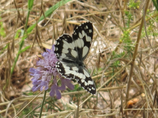 papillons sur nos fleurs  10p3qy