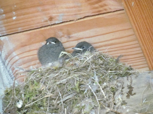 les oiseaux et petites bêtes au cours de nos balades - Page 5 15b2rh