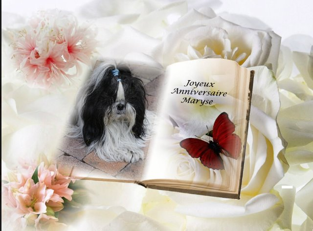 La Salamandre Forum De Discussion Specialise Sur Le Shih Tzu Une